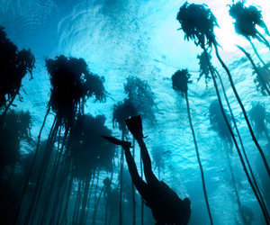 awesome, human, and ocean image