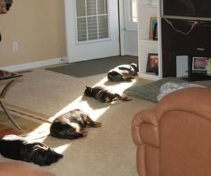 dog, funny, and sun image