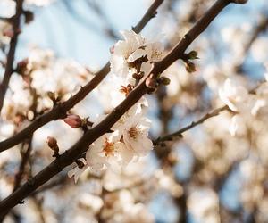 analog, analogue, and blossoms image