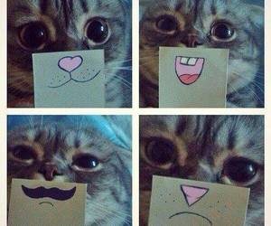 cat, cute, and funny image