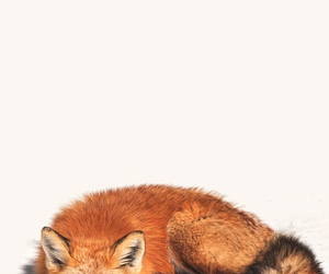 animal, fox, and cool image