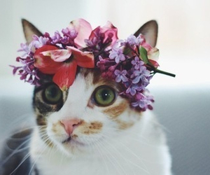 calico, floral, and kitty image