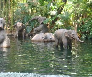 elephant, animal, and jungle image