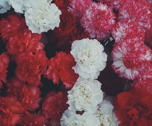 flowers, summer, and white and red image