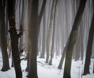 forest, winter, and woods image
