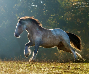beautiful, draft, and equestrian image