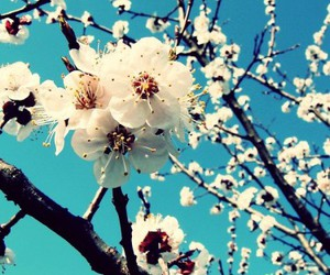 flowers and blossom image