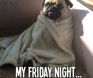 dog, friday, and funny image