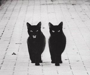 adorable, babies, and kitty image