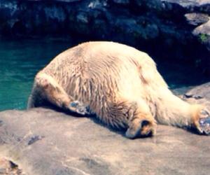 Polar Bear and get depressed image