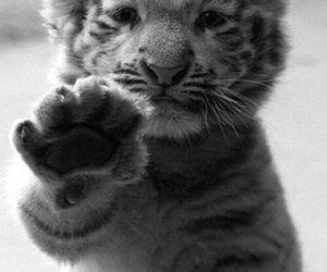 adorable, animals, and rawr image