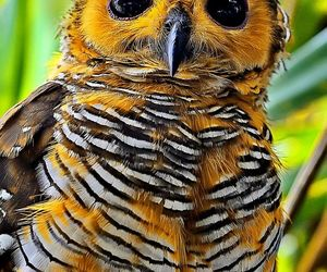 bird, owl, and spotted wood owl image