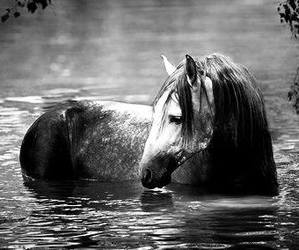horse, water, and equestrian image