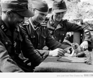 soldier, cat, and kitten image