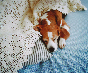 dog, cute, and vintage image