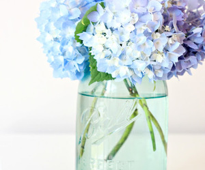 flower, hydrangea, and minimal image
