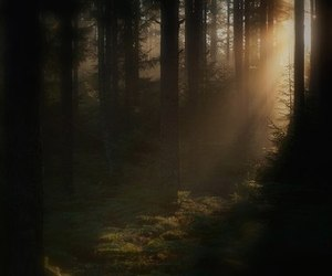 fog, nature, and trees image