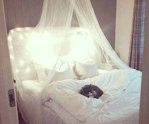 bedroom, bed, and cat image