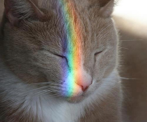 animals, cat, and prism image