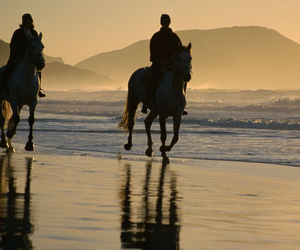 beach, horse, and riding image