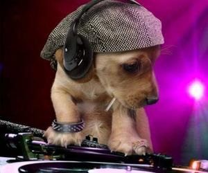 dog and dj image