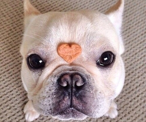 dog, cute, and heart image
