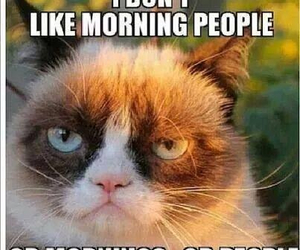 morning, cat, and people image