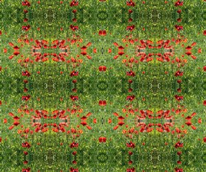flower, red, and green image