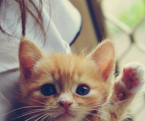 chaton and cute image