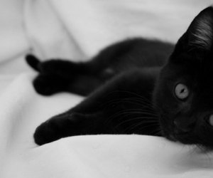 black and white, black cat, and cat image