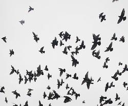 bird and free image