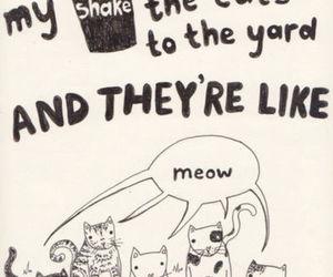 cat, milkshake, and funny image