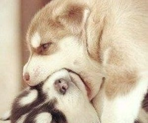 dog and cute image