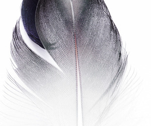 feather, texture, and ctscts image