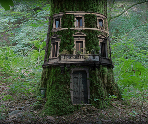 tree, forest, and house image
