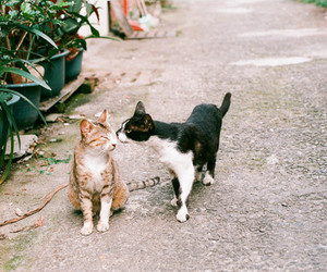 cat, animal, and kiss image