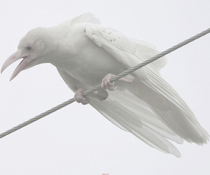 bird, white, and albino image