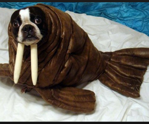 funny, dog, and costume image