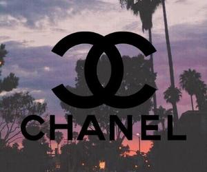 beautiful, chanel, and palm tree image
