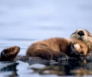 otter and animal image