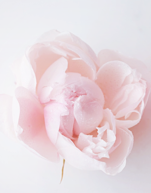 Pink pastel flowers image collections flower decoration ideas pink pastel flowers images flower decoration ideas pink pastel flowers image collections flower decoration ideas pink mightylinksfo
