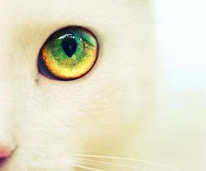cat, eye, and white image
