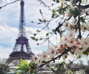 paris, spring, and flowers image