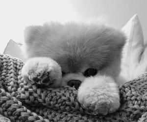cute, dog, and boo image
