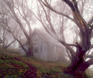 house, tree, and fog image