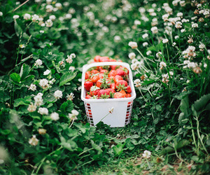 strawberry, food, and grass image