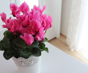 cosy, floral, and flowers image