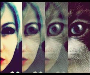asian, cat, and korean image