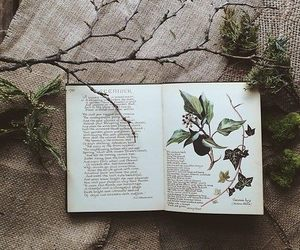 book, green, and nature image