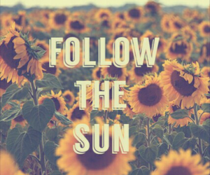 hipster, quote, and summer image